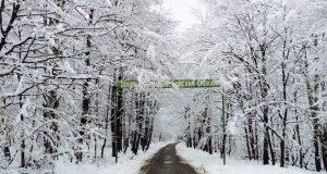 Пътят към Ски зона Ком, която тази година се радва на хубав сняг