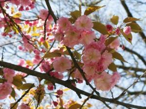 Пролетен цвят | снимка: общ. Вършец
